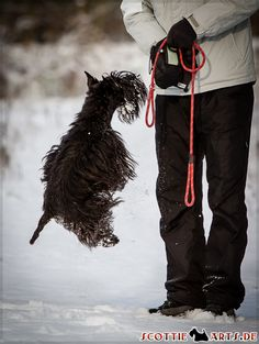 Reminds me of little huck I had to try to come to me in the deep snow the other day