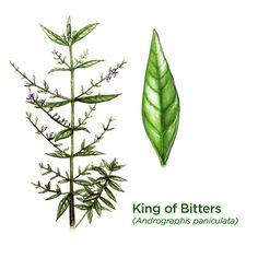 King of Bitters - (for Rheumatoid arthritis)