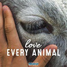 Mercy For Animals. Mercy For Animals, Save Animals, Animals Beautiful, Beautiful Creatures, Vegan Facts, Vegan Quotes, Vegetarian Quotes, Stop Animal Cruelty, Vegan Animals