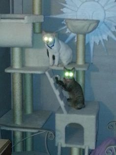 A COUPLE OF MY KITTIES ON THEIR NEW CAT CONDO****THEY TURNED INTO ALIENS!