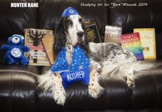 Hunter Kane is studying for his Bark Mitzvah. He will turn 13 years old in December 2014.