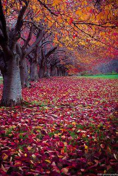Autumn love....