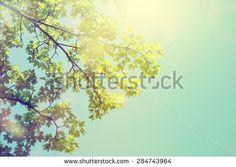 Nature Stock Photography | Shutterstock