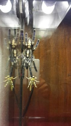 . Poecilotheria Metallica, Candle Sconces, Wall Lights, Candles, Home Decor, Collection, Homemade Home Decor, Appliques, Candle Wall Sconces