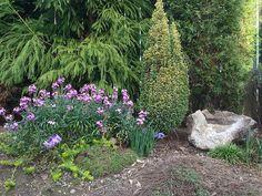 Back Garden, East Fence