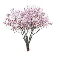 tree flower pink