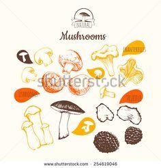 Hand-drawn sketch on white background. Fresh organic food. Mushrooms: shiitake, chanterelle, honey. Sketch of mushrooms on white background. - stock vector