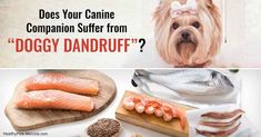 Triggers Doggie Dandruff and Skin Problems, Do You Let Any of These Things Slide?