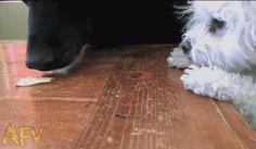 Vídeo de cãozinho mostra a lei do mais forte  http://r7.com/PxG5