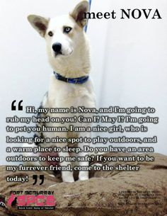 #Husky NOVA is still waiting for her forever home.  Can YOU please help? The Fort McMurray #SPCA in #Fort #McMurray, #Alberta, #Canada has some beautiful #dogs for #adoption and here is #Husky NOVA! If you live in #Canada and wish to #adopt Nova, you MUST submit an adoption application which can be found here: http://www.fortmcmurrayspca.ca/ For more information on Nova or on any of the other #dogs, please: Email: Info@fortmcmurrayspca.ca or telephone: 780-743-8997.