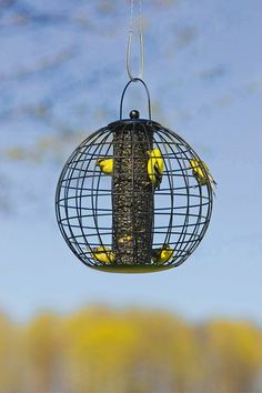 Globe Cage Feeder on a shepherd's hook and we can watch the birds from the kitchen.