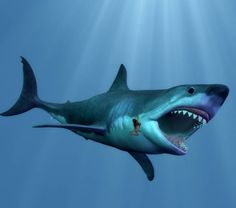 Megalodon was the biggest shark that ever lived, making the Great White Shark seem like a guppy. Here are 10 fascinating Megalodon facts. Big Shark, Shark Art, Megalodon Still Alive, Shark Pictures, Dinosaur Pictures, Species Of Sharks, Megalodon Shark, Animais, Animals
