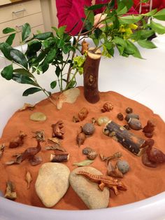 Wooden Australian animals on brown sand with rocks, wood and leaves. Looked amazing!