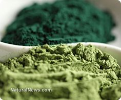 Spirulina may help elderly patients with anemia and immunological dysfunction
