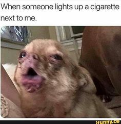 Really funny pictures , wirklich lustige bilder , ima… – funny memes Funny Animal Jokes, Crazy Funny Memes, Really Funny Memes, Cute Funny Animals, Stupid Memes, Memes Humor, Stupid Funny Memes, Funny Relatable Memes, Funny Tweets