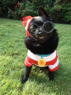 Penny's Halloween costume! Where's Waldo Dog Costume :)