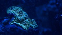 Coral With Fluorescent Dots https://madipix.com/coral-with-fluorescent-dots/