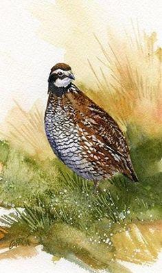 Bobwhite by Joe Garcia Watercolor I love our precious quail that come through our yard. by bertha