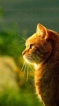 Animal Shelter, Animal Rescue, Orange Tabby Cats, Yellow Cat, Small Cat, Cat Photography, Ginger Cats, Animal Heads, Cat Health