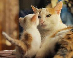 「動物の可愛い写真」の画像検索結果