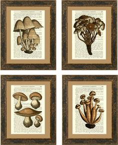 forgottenpages-French-Mushroom-Vintage-Encyclopaedia-Gardening-page-all.jpg (570×702)