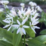 AIL DES OURS AB Organic Gardening, Plants, Avril Mai, Guide, Alternative, Sausages, Permaculture, Recherche Google, Champs