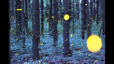 A Beautiful Time-Lapse  of Fireflies Swarming would look awesome as a painting.
