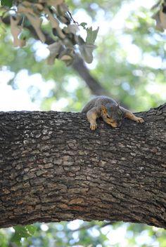 squirrels are so cute.