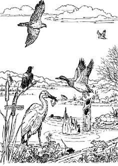 wetlands coloring sheets yahoo image search results it 39 s world wetlands day world. Black Bedroom Furniture Sets. Home Design Ideas