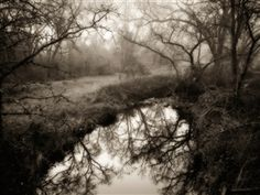 Pond near Shingle Springs, California Hand printed Platinum/Palladium Photograph by Kerik Kouklis 15x20 ©Kerik Kouklis, All rights reserved