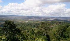 Bezerros vista de Serra Negra
