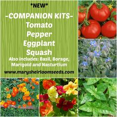 Companion Planting Combo Pack                                                                                                                                                                                 More