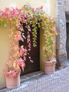 Perfection! It's only two pots at a doorway on a narrow street in Tuscany, but it's delicious.