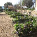 La agricultura sinérgica: horticultura en su dinámica salvaje