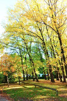 Autumn in Arrow town,New Zealand アロータウンの黄葉