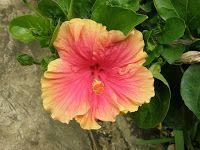 A Bajan Tour Girl Exploring Barbados: The Flora and Fauna of Barbados