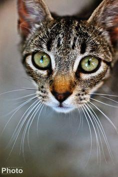 Tabby Eyes