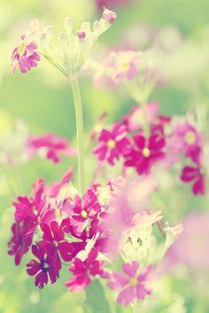 Nourish Your Soul : Photo