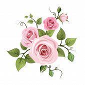 foto of english rose  - Vector branch of pink roses with green leaves isolated - JPG