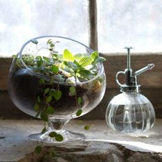 Spotlight Terrarium in Gardening PLANTERS Terrariums Vessels at Terrain