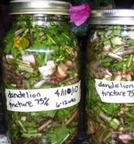 Dandelion Tincture... take a spoon a day and rejuvenate ur body. Said be a cure all and a liver tonic