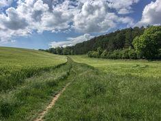 Un entre-deux champs  #sentier #randonnée pédestre#chemin #foret #GR #PR #marche #nature Vineyard, Country Roads, Outdoor, Pathways, Wild Boar, Paths, Walking, Drill Bit, Outdoors