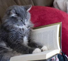 As you can see, Oliver is completely engrossed in the book and doesn't seem to notice he's being photographed.  http://sunnydaypublishing.com/books/