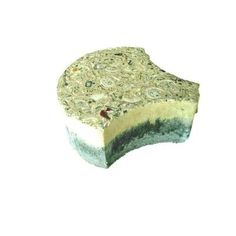 Earth Surfaces of America 6 in. x 2 3/8 in. Key West Shell Paver Buff with Shells and Abalone (98 sq. ft. per pallet)-BF6KWS - The Home Depot