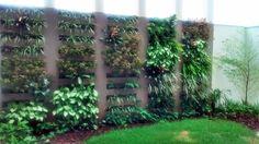 Green Wall, Parede Verde, Bambu Mossô.