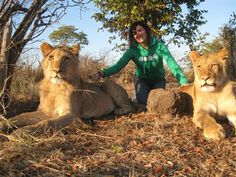 Volunteer with Lions in Livingstone, Zambia. This is an extension of our Antelope Park, lion breeding and rehabilitation programme, along with conservation work and education.  https://www.facebook.com/pages/African-Impact-Lion-Rehabilitation-Livingstone/276063189122108?fref=ts