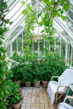 There is no more hurdle to know how to do greenhouse gardening? Greenhouse gardening is only possible in the best climatic conditions and weather variables. Simple Greenhouse, Outdoor Greenhouse, Cheap Greenhouse, Greenhouse Gardening, Greenhouse Ideas, Rustic Greenhouses, Greenhouse Interiors, Garden Buildings, Indoor Garden