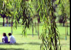 Eccovi un parco milanese che non tutti conoscono… non è lontanissimo dal centro ma è forse in una posizione per la quale passa spesso inosservato.