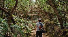 Mejores rutas senderismo Tenerife norte