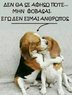Ι never leave you. do not worry. i am not human. Dog Quotes Love, Cute Quotes, Animals And Pets, Funny Animals, Cute Animals, Funny Animal Videos, Funny Animal Pictures, I Love Dogs, Cute Dogs